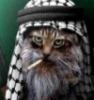 cat-shamag