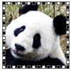 jaiant_panda userpic