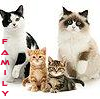 buzziecat: Family of cats