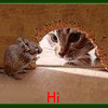 buzziecat: HI Mouse in hole - Cat looking in