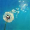 [Stock] flower flying