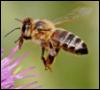 cloverhoneybee userpic
