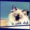 life in 1080p: oscar [le petit chat]