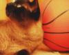 баскеткот