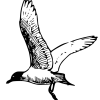 fleetwoodgull userpic