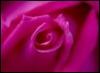 lesgo4it userpic