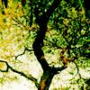 [Stock] Tree of life