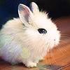 emptyed: stock  |  bunni!  |  aww