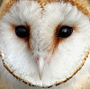 owl_ink userpic