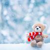 winter bear (sunlitdays)
