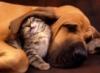 Кот с собакой