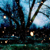 tempestsarekind: branches and fairy lights