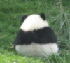 panda_online userpic