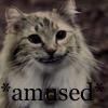 Kazuko: amused kitty