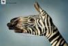 руки-зебра