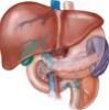 liverliverliver userpic