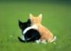 sombrero83: abbraccio