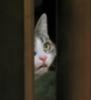 liana_liana: Василиса из-за двери