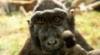 обезьяна с пальцем