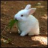 camhappybunny userpic