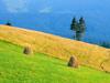 chornogora