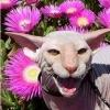 lemur_cake userpic
