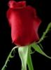 dasha_dikula userpic