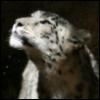spottedfur userpic