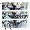 Alice - Creepy Cat