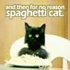 Cecilie: Stock - Spaghetti Cat