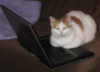 kitty and laptop