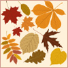 Assorted_leaves