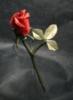 loneflower14 userpic