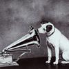 dog phonograph