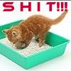 buzziecat: SHIT!!!