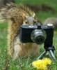 белка-фотограф