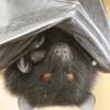 firebat_cat