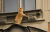 кот любопытный