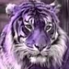 avalontiger userpic