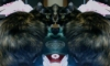 phyrablaze: kitty