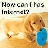 Doggie wants internet