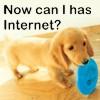 Doggie wants internet