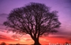 Sunrise tree