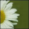 tiline userpic