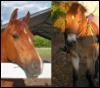 horses(: