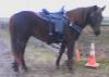 trailhorse