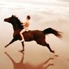 black stallion / riding