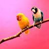 [ lovebirds ]