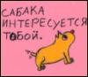 сабака