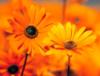 blazinganchor97 userpic
